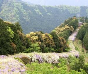 写真:みやまの里森林公園・藤棚ロード