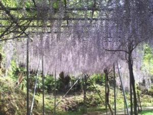 写真:みやまの里森林公園・藤棚ロード(3枚目)