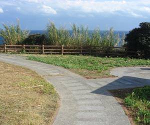 写真:樫野崎灯台とスイセン (2枚目)