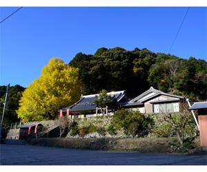 写真:光泉寺の大銀杏 (3枚目)