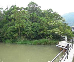 写真:浮島の森