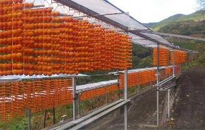 写真:四郷の串柿