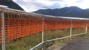 写真:四郷の串柿 (2枚目)