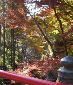 写真:根来寺の紅葉谷