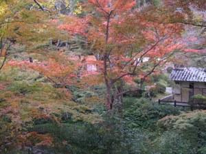 写真:根来寺の紅葉谷(2枚目)