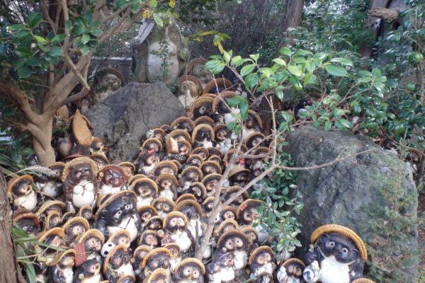 写真:淡島神社のたぬき