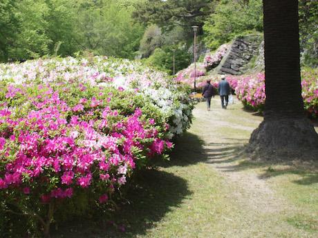 写真:和歌山城のツツジ