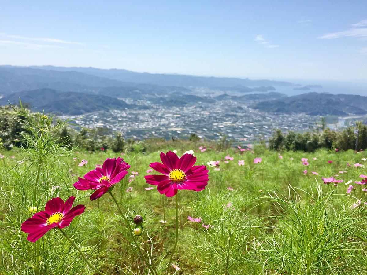 写真:鷲ヶ峰コスモスパーク
