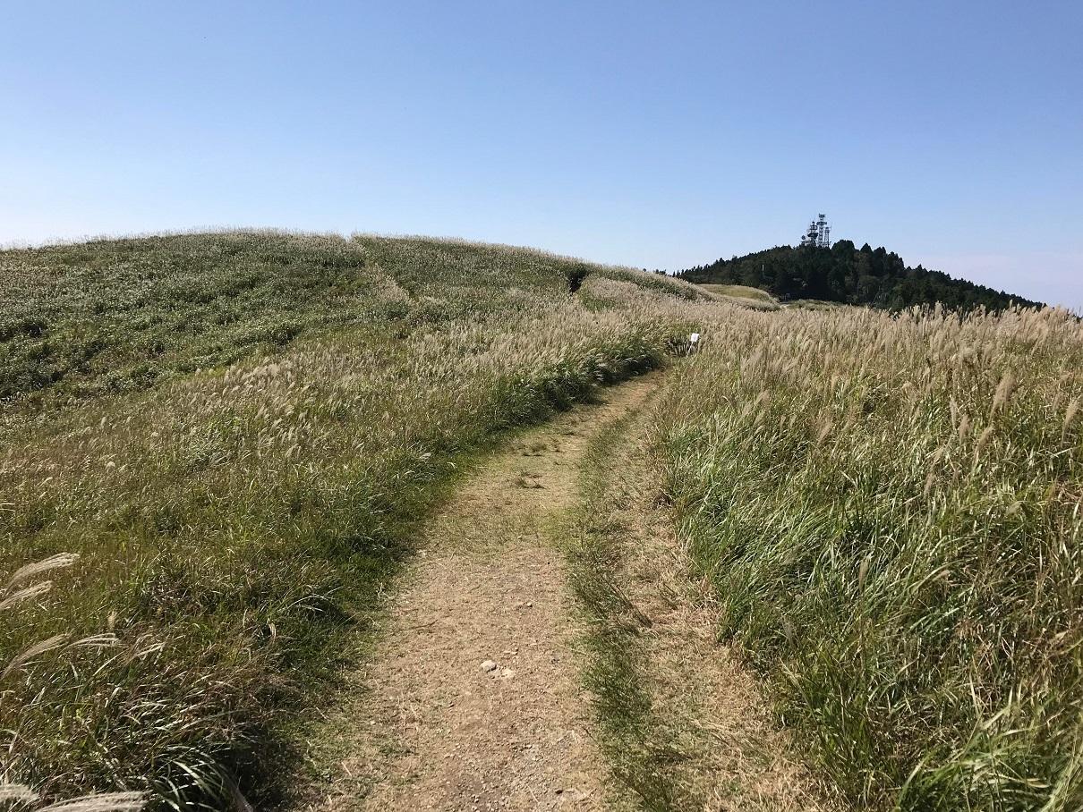 写真:ススキの道(2枚目)