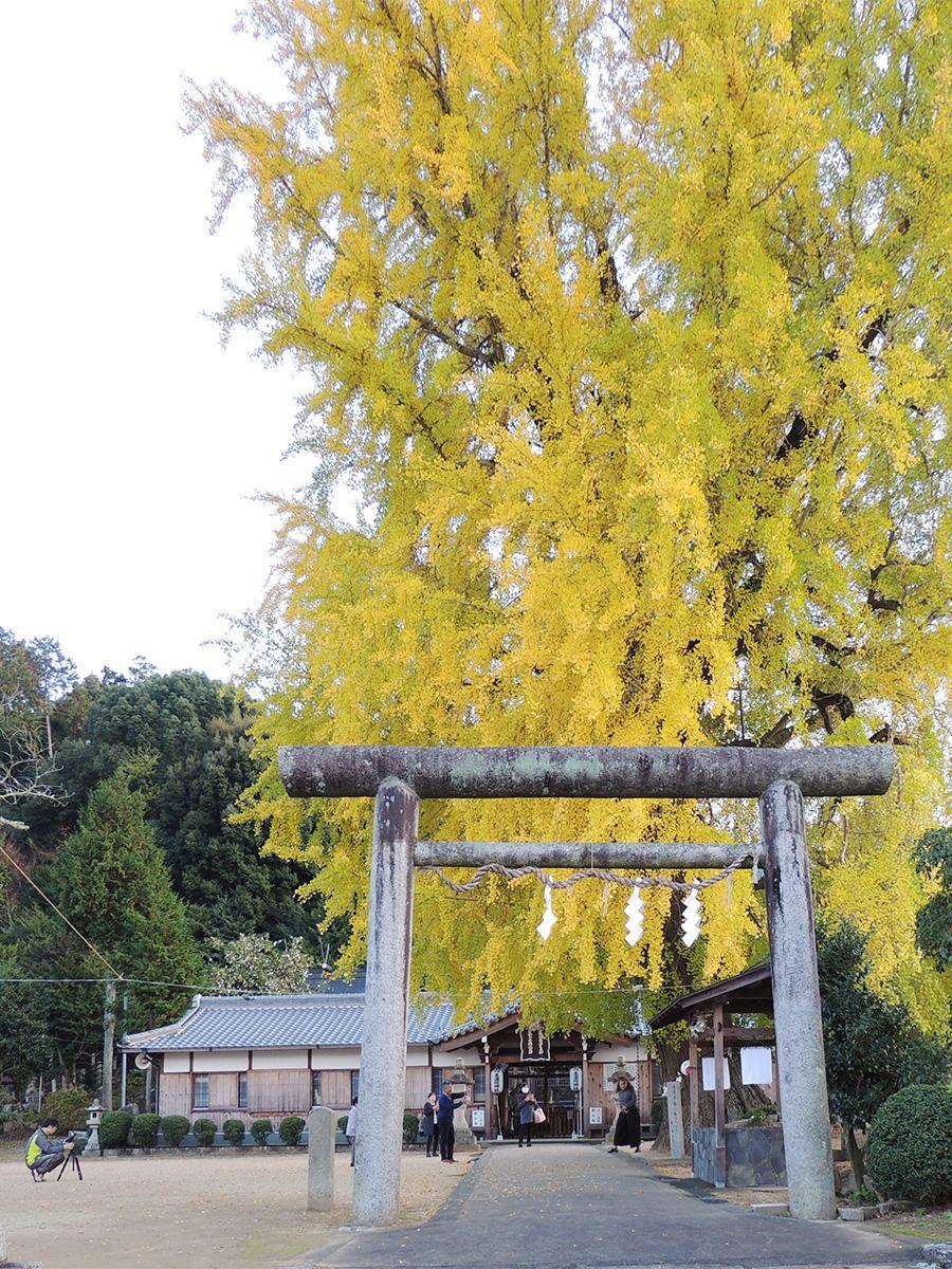 写真:丹生酒殿神社の大イチョウ(1枚目)