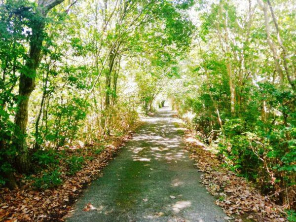 写真:トトロの道