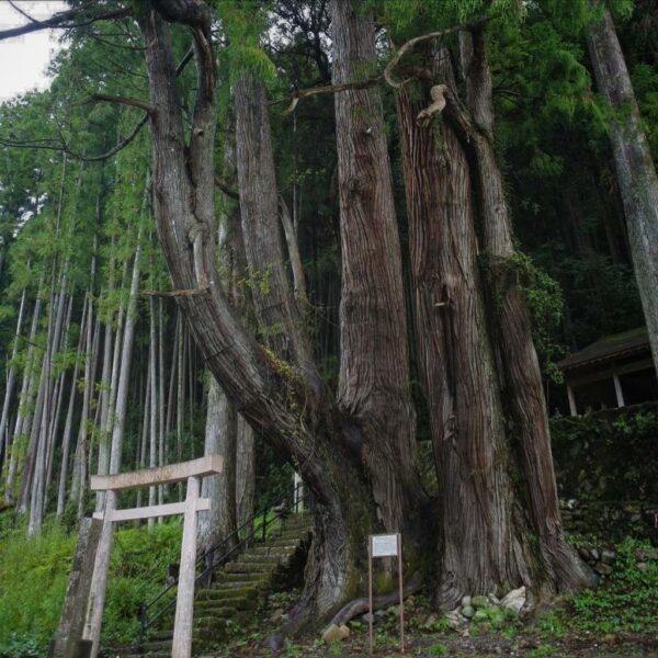 写真:巨木に守られし社 甲明神社