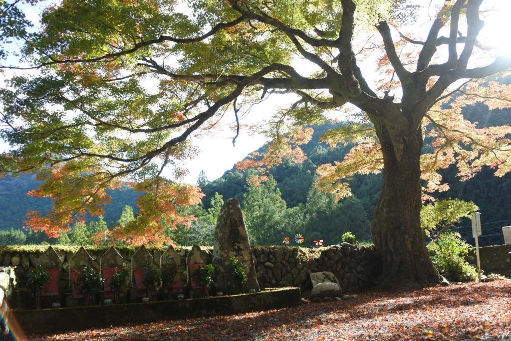 写真:瀧川寺の地蔵紅葉(1枚目)